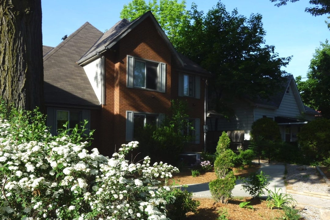 Brown brick, 2 story house with white shutters, white floral bush in the front and a big green tree in the backyard.